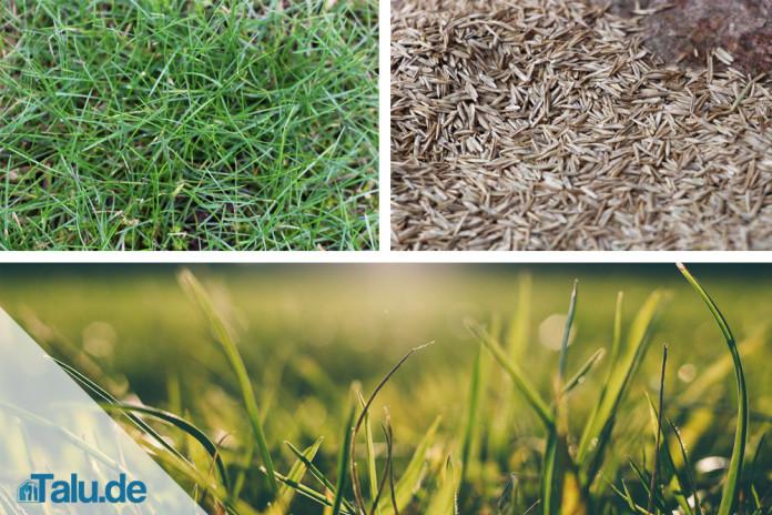 Rasen Säen So Wirds Gemacht Talude
