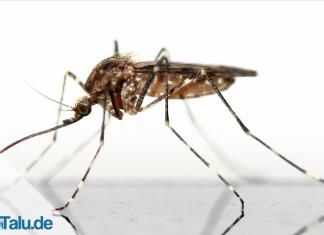 Hausmittel gegen Mücken