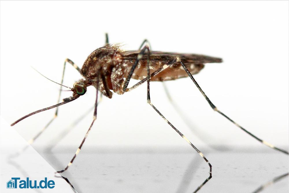 stechmückenfrei mit natural fresh. nexa lotte ultra mücken