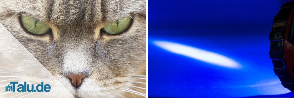 Katzenspielzeug Selber Machen Schnelle Ideen Zum Basteln Talude