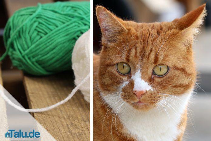 Berühmt Katzenspielzeug selber machen - Schnelle Ideen zum Basteln - Talu.de MQ54