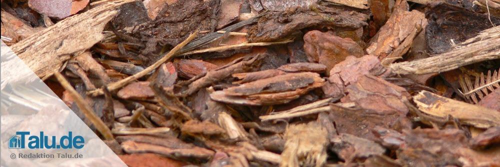 Boden um die Pflanze herum mulchen