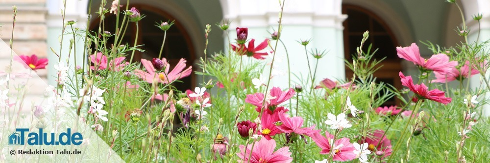Naturgarten Blumen