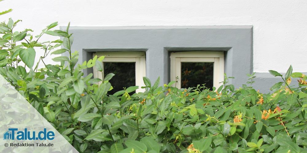 Kellerfenster von Gebüsch befreien