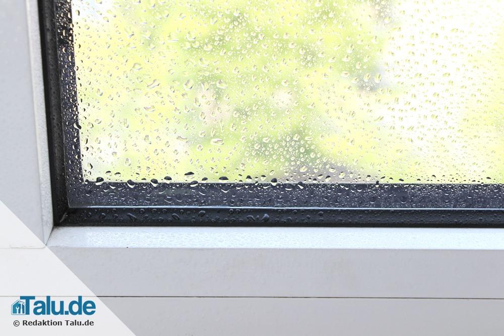 kondenswasser innen am fenster vermeiden das hilft. Black Bedroom Furniture Sets. Home Design Ideas
