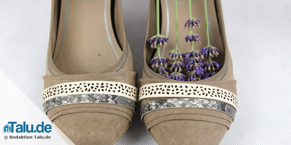 Lavendel in den Schuhen desinfiziert