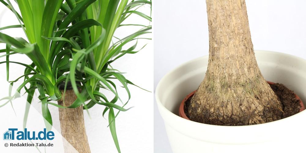 gro e zimmerpflanzen 5 pflegeleichte pflanzen f r drinnen. Black Bedroom Furniture Sets. Home Design Ideas