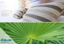Pflanzen im Schlafzimmer