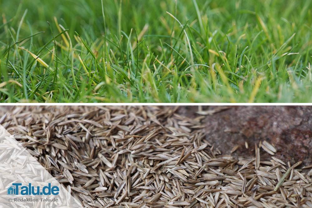 Atemberaubend Rasen säen im Oktober/November - wann ist es zu spät? - Talu.de #VQ_45