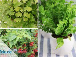 Zimmerpflanze, die wenig Licht brauchen