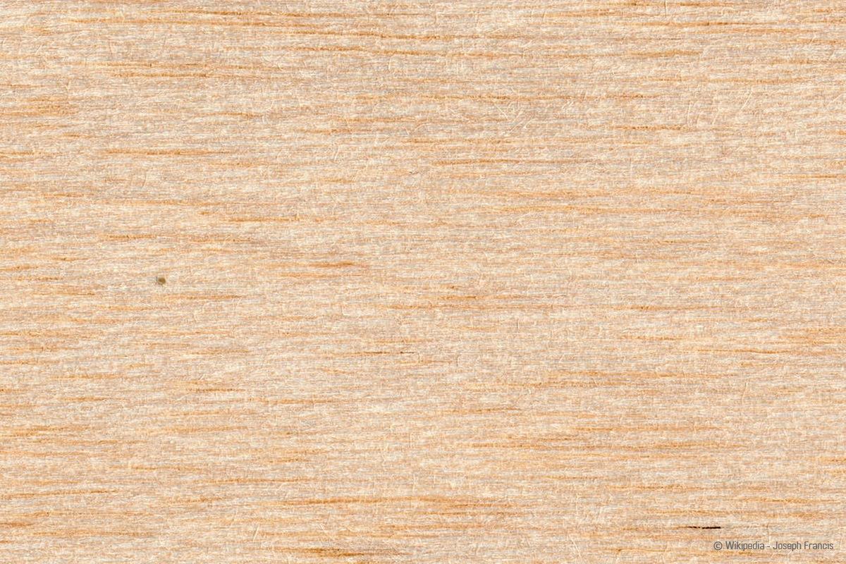 Holzarten Erkennen Ubersicht Mit 33 Weich Und Hartholzarten Talu De