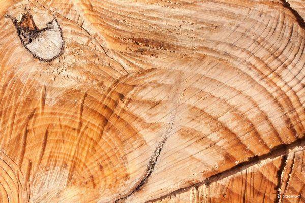 Rotbuchenholz