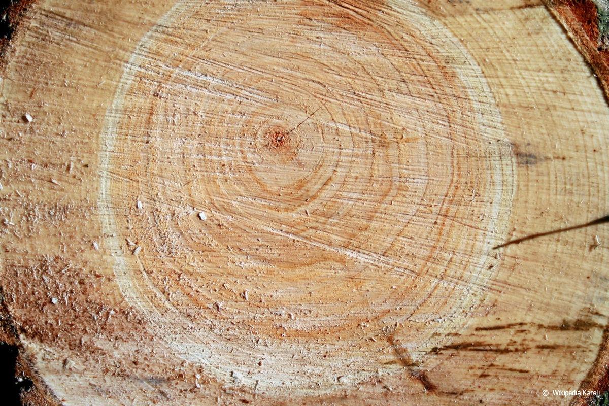 Holzarten Erkennen übersicht Mit 33 Weich Und Hartholzarten Talude