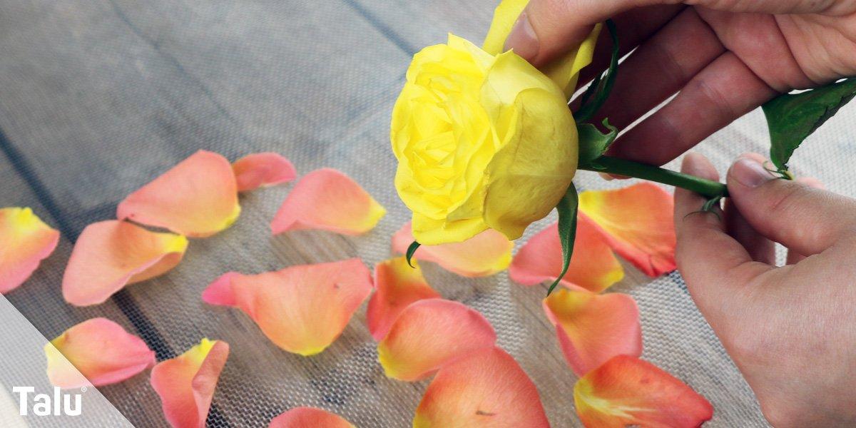 Rosenblätter zupfen