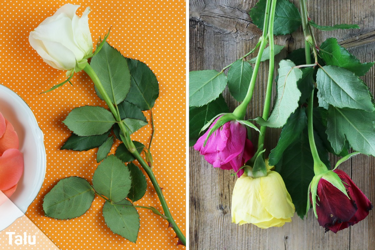 Rosen aufhängen