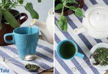 Kräuter für Tee sammeln