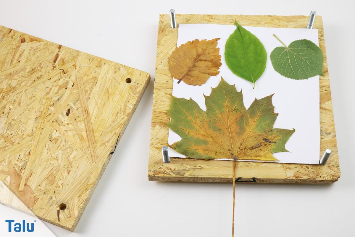 Blätter Pressen blätter pressen und trocknen so erhalten sie die farbe talu de