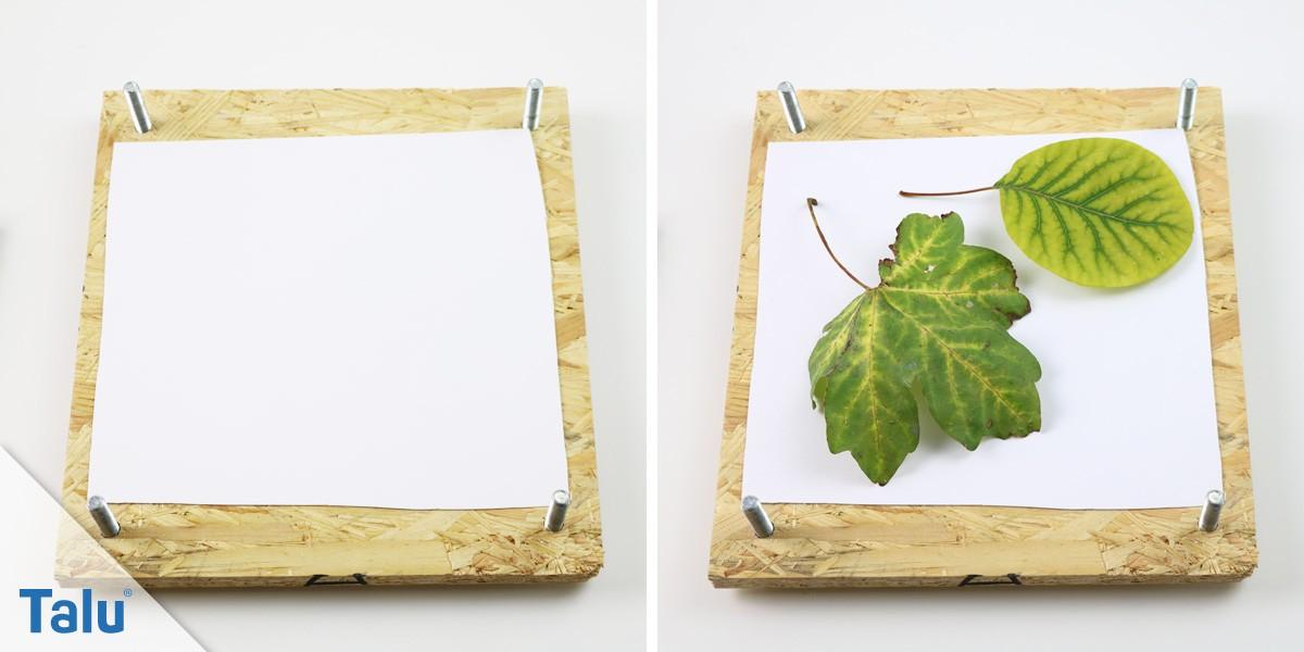 Blätter pressen und trocknen - so erhalten Sie die Farbe - Talu.de