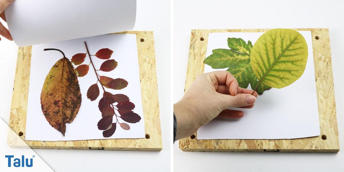 Blätterpresse