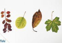 Blätter pressen