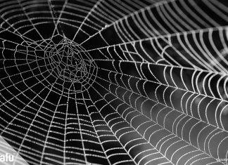 Spinnennetz basteln