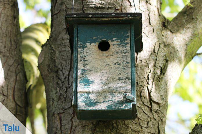 Nistkasten Aufhängen Himmelsrichtung : nistk sten aufh ngen die ideale himmelsrichtung f r 20 vogelarten ~ Watch28wear.com Haus und Dekorationen