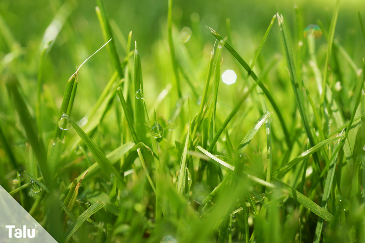 Rasen lüften