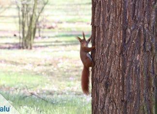 Eichhörnchen füttern