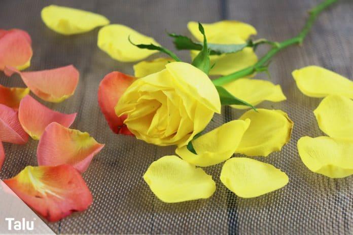 Berühmt Rosen trocknen - Tipps und Hausmittel zum Konservieren - Talu.de @TG_23