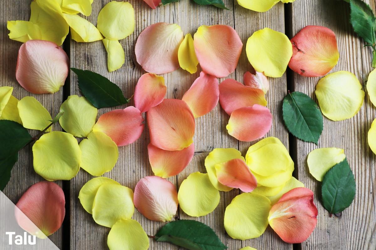 Rosen trocknen