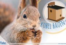 Kobel bauen, Eichhörnchenhaus aus Holz