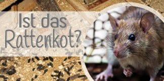 Ist das Rattenkot?