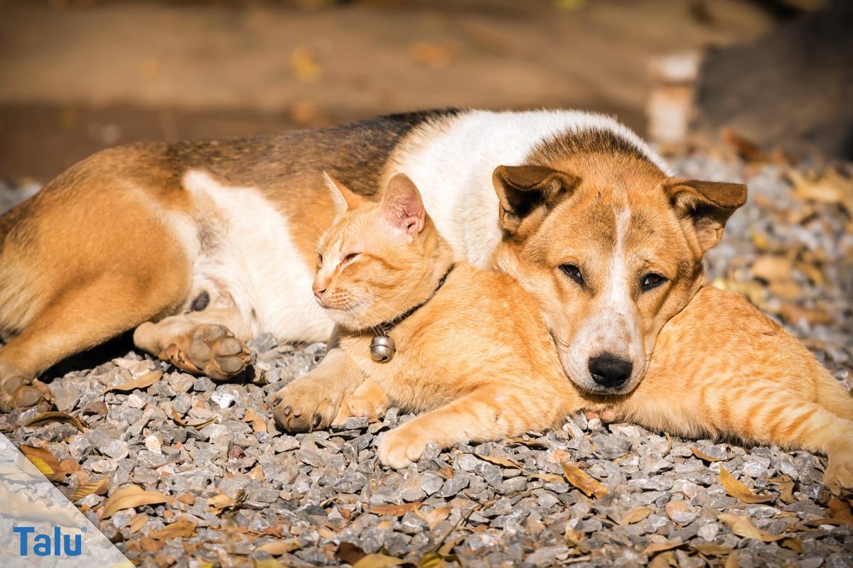 Spielhaus aus Pappe bauen, auch für Haustiere umbaubar