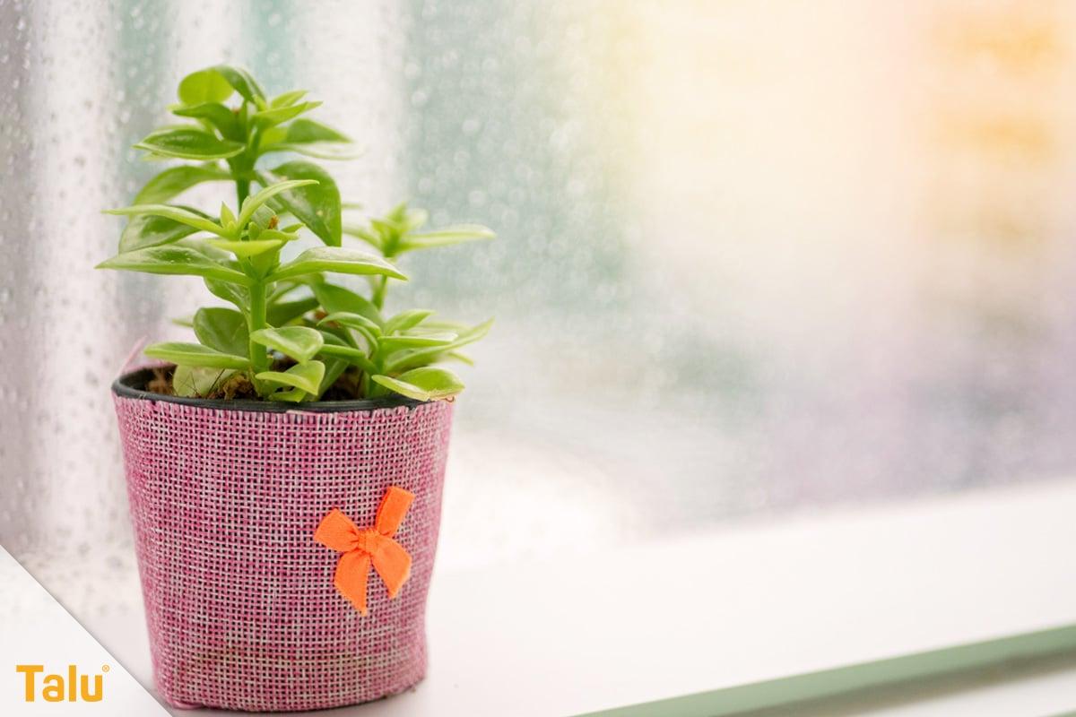 Sonne liebende Zimmerpflanzen, Pflanze am Fenster