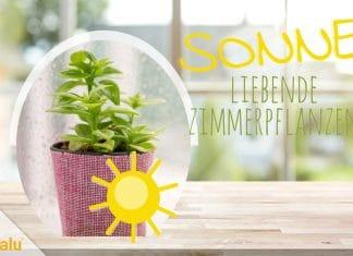 Sonne liebende Zimmerpflanzen, Pflanzen für die Südseite/Südfenster