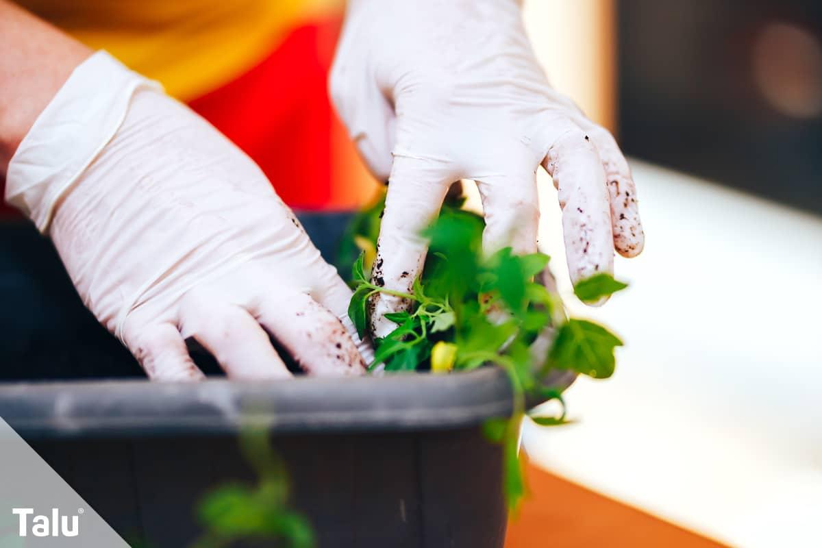 ideale Balkonpflanzen für schattige Standorte, Blumenkasten bepflanzen