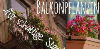 ideale Balkonpflanzen für schattige Standorte