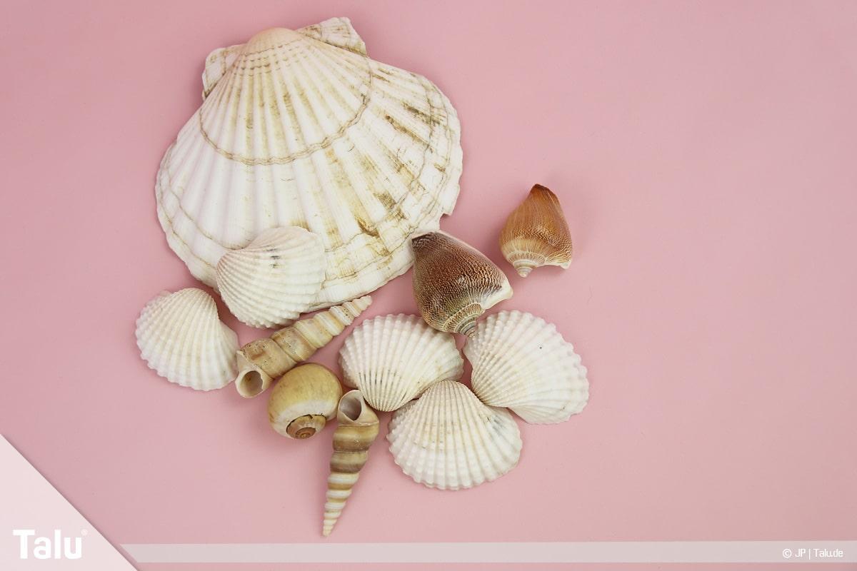 Basteln mit Steinen und Muscheln, Ideen, verschiedene Muscheln