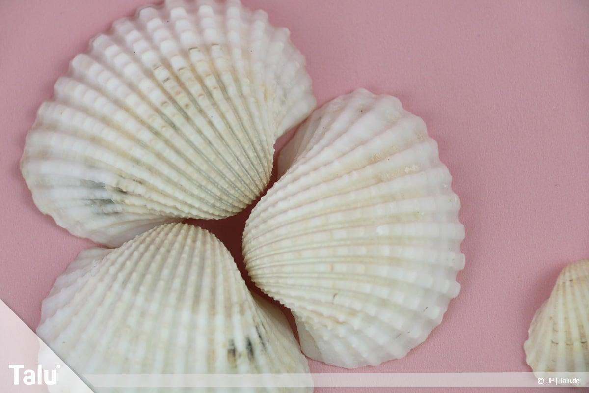 Basteln mit Steinen und Muscheln, Ideen, Herz-Muscheln