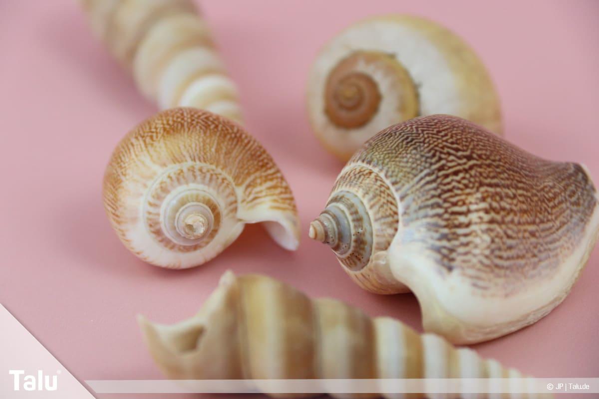 Basteln mit Steinen und Muscheln, Ideen, Muschel-Sorten