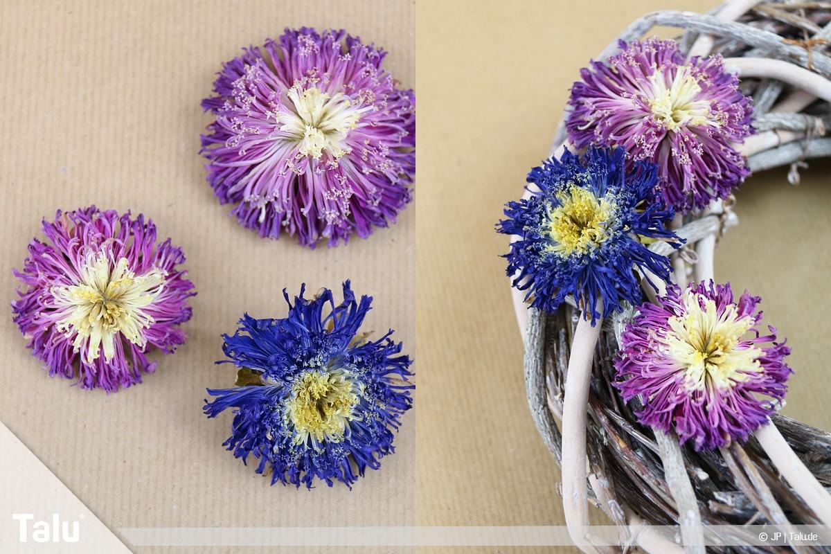 Herbstkranz selber basteln, Anleitung, Asternkranz mit getrockneten Asternblüten