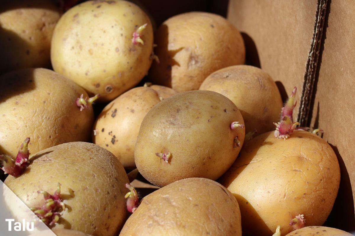 Kartoffelstärke gegen Flecken