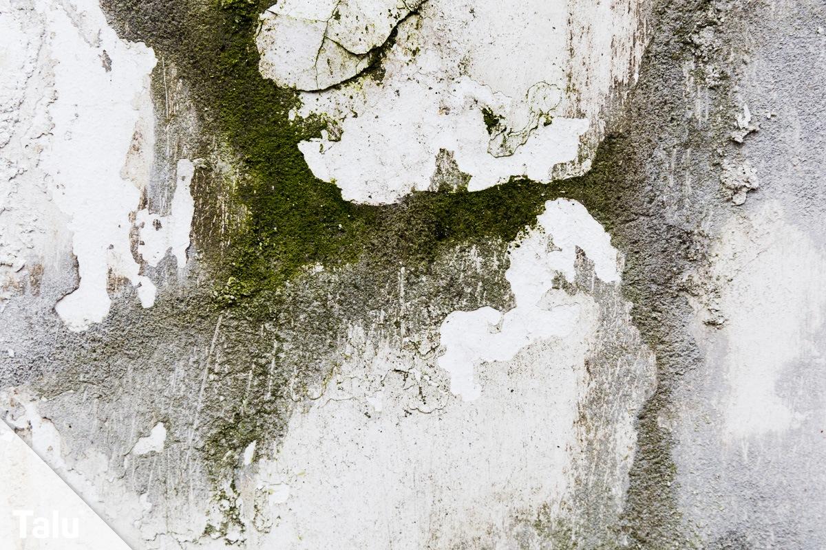 Moos an Fassade