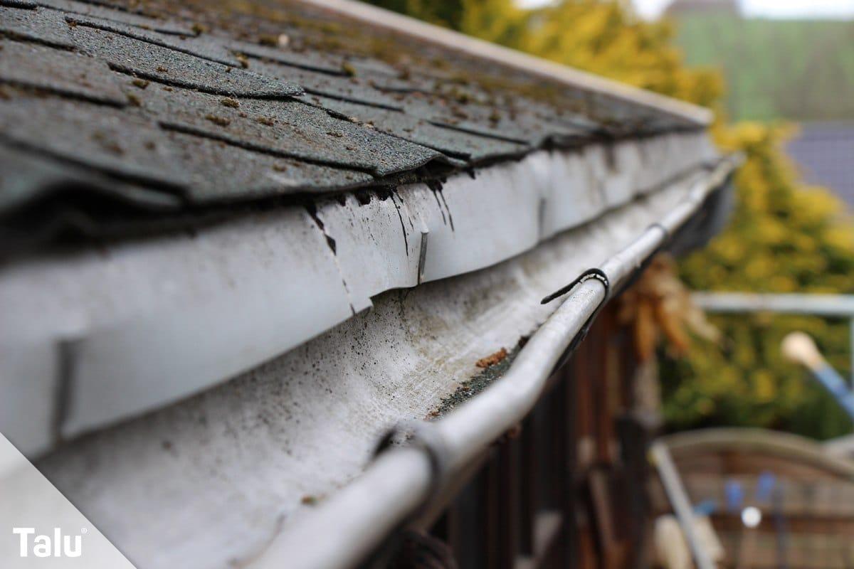Moos auf dem Dach