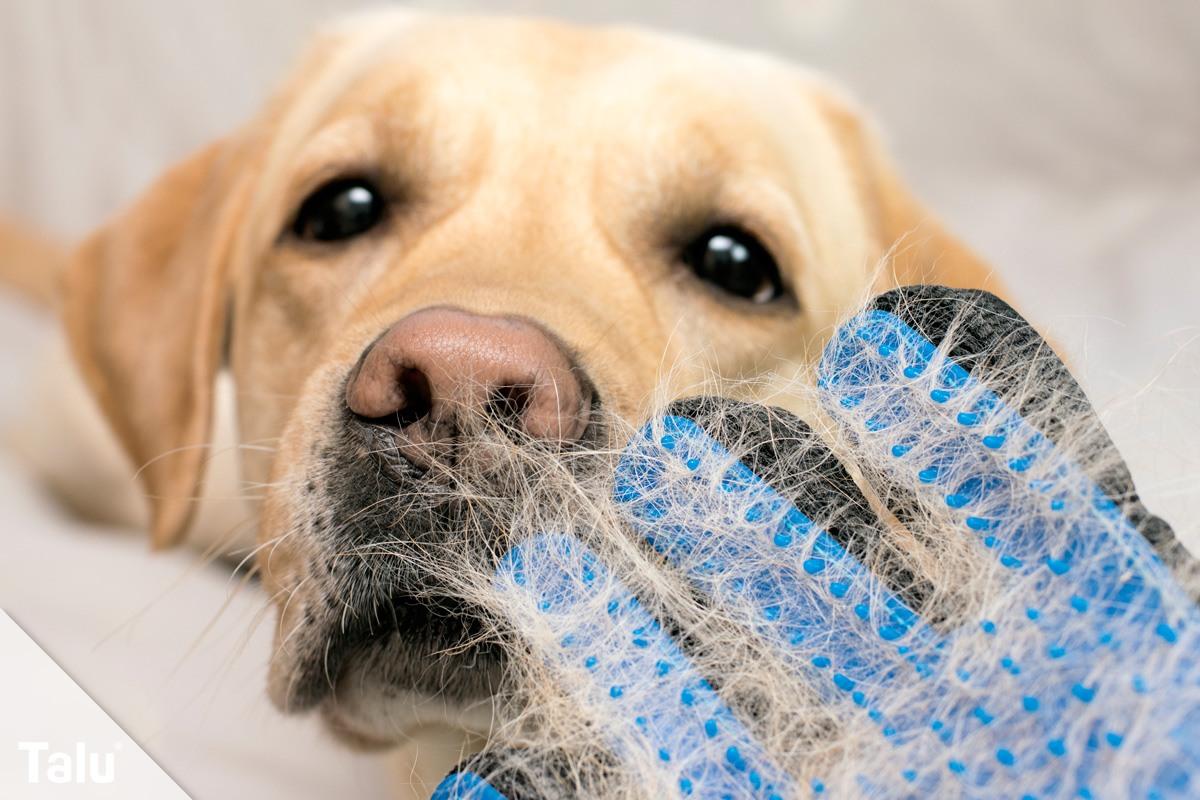 Hund bürsten