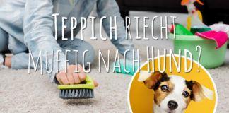 Teppich riecht muffig nach Hund