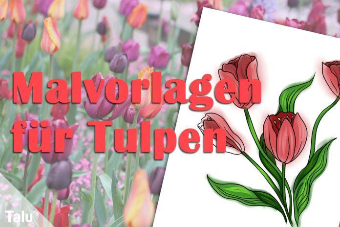 Malvorlagen für Tulpen