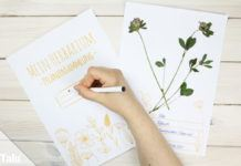 Herbarium anlegen