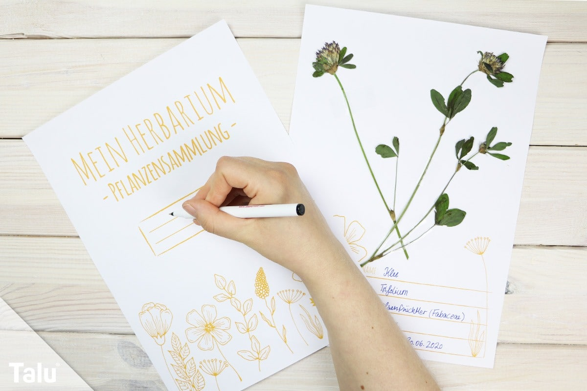 Herbarium Anlegen Anleitung Kostenlose Vorlage