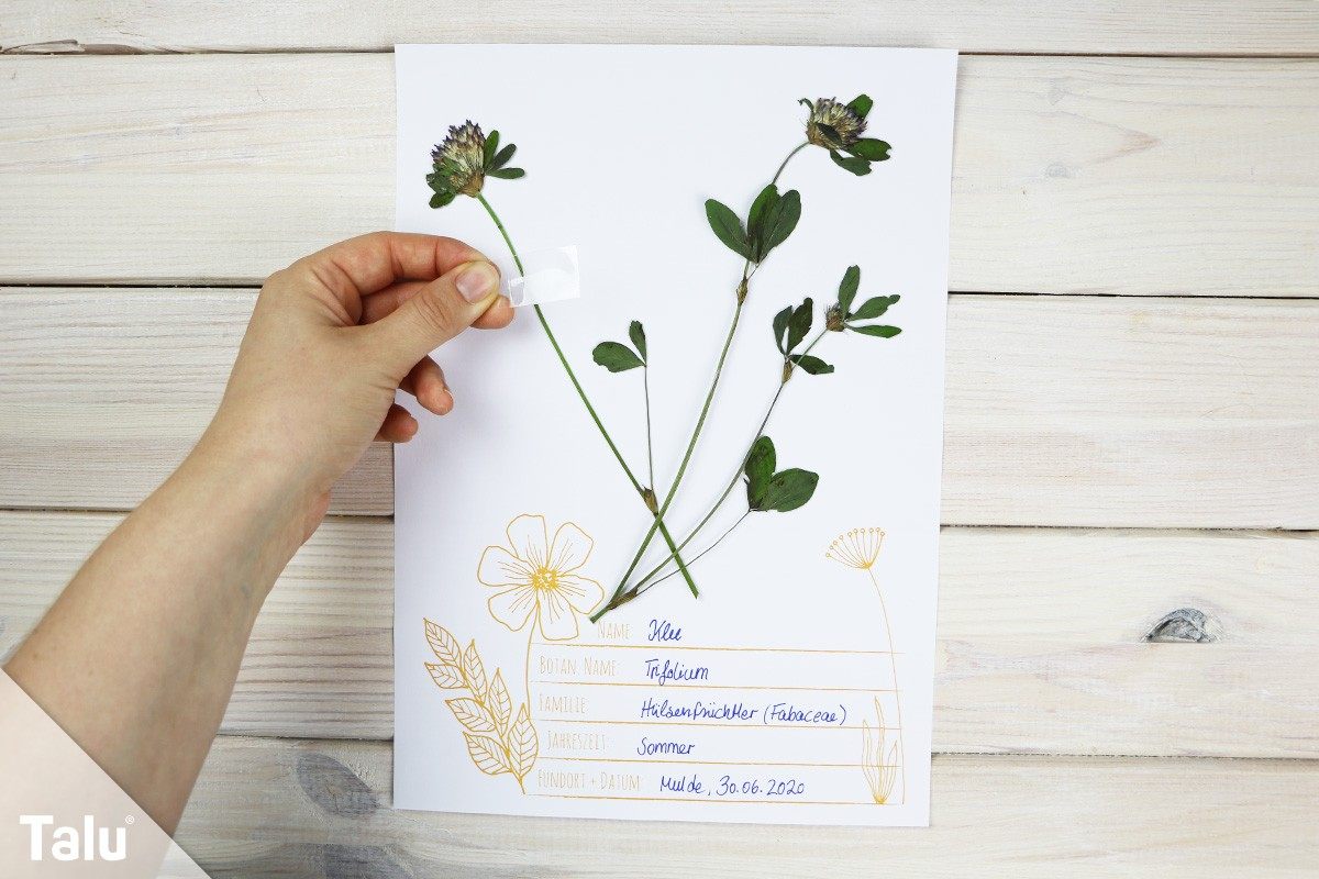 Herbarium Sheet Template Google Search Labels 2